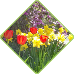 Seasonal Flower Color Rotation Gardening Services in Bergen County, New Jersey